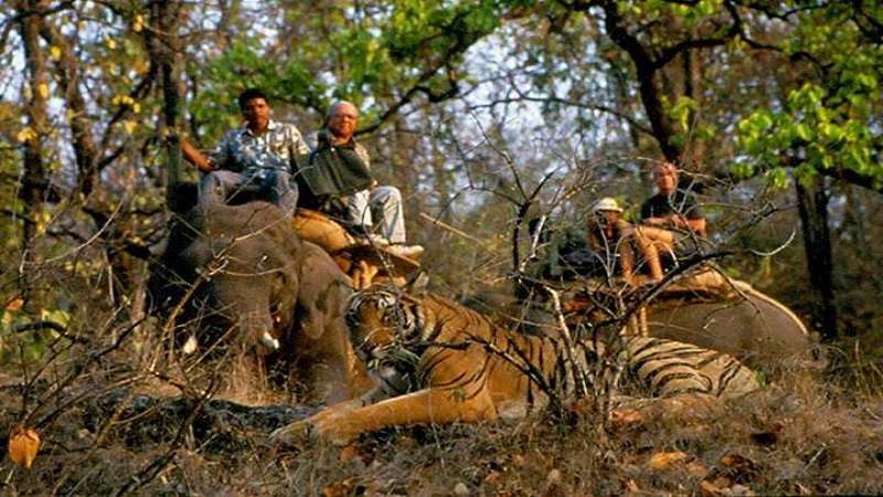 Pench National Park Weekend Tour