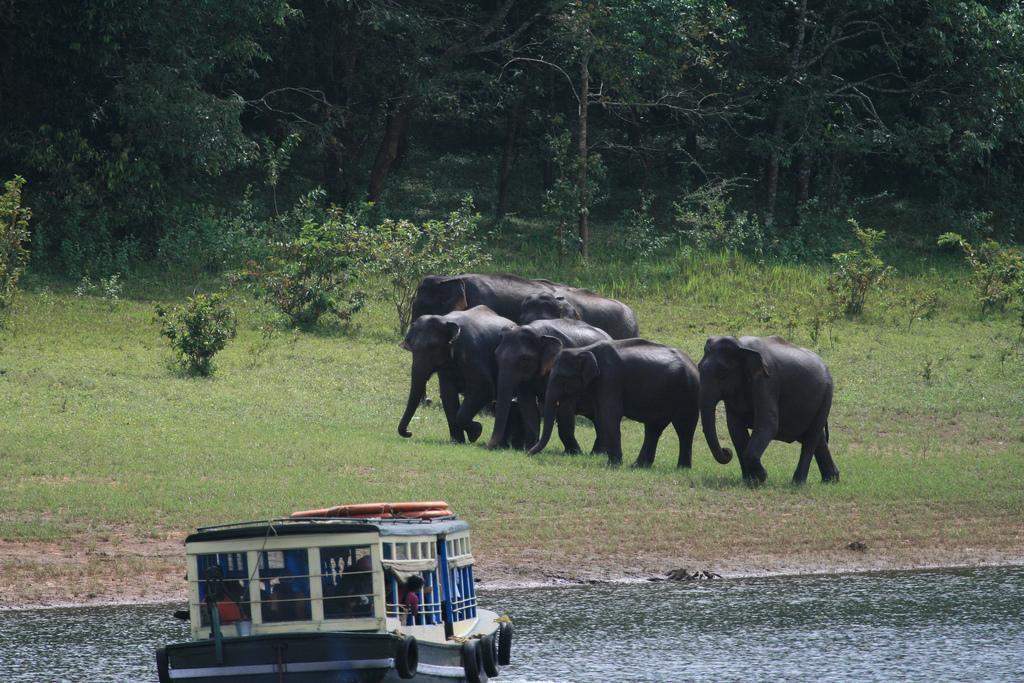 Thekkady Tour From Cochin
